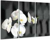 Glas schilderij Orchidee, Bloemen | Zwart, Wit | 120x80cm 3Luik | Foto print op Glas |  F007475