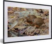 Foto in lijst - Twee patrijzen tussen bladeren fotolijst zwart met witte passe-partout 60x40 cm - Poster in lijst (Wanddecoratie woonkamer / slaapkamer)