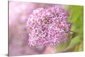 Close up van een hortensia Aluminium 180x120 cm - Foto print op Aluminium (metaal wanddecoratie) XXL / Groot formaat!