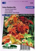 Sluis Garden - Siernetel Rainbow Mix (Coleus blumei)