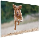 Rennende hond foto Glas 180x120 - XXL cm - Foto print op Glas (Plexiglas wanddecoratie)