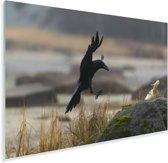 Zwarte raaf landt op een rots Plexiglas 90x60 cm - Foto print op Glas (Plexiglas wanddecoratie)