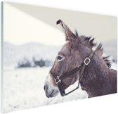 Ezel in de sneeuw Glas 180x120 cm - Foto print op Glas (Plexiglas wanddecoratie) XXL / Groot formaat!