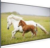 Paard en veulen rennen Aluminium 180x120 cm - Foto print op Aluminium (metaal wanddecoratie) XXL / Groot formaat!