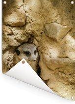 Stokstaartje zit verstopt in een rots Tuinposter 60x80 cm - Tuindoek / Buitencanvas / Schilderijen voor buiten (tuin decoratie)