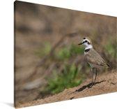 Strandplevier op een droge vlakte Canvas 30x20 cm - klein - Foto print op Canvas schilderij (Wanddecoratie woonkamer / slaapkamer)