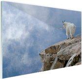 Berggeit bij een klif  Glas 120x80 cm - Foto print op Glas (Plexiglas wanddecoratie)