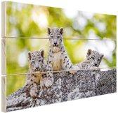 Drie luipaard welpen  Hout 60x40 cm - Foto print op Hout (Wanddecoratie)