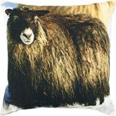 kussen canvas ijslandse schapen 50x50cm