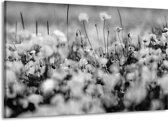 Schilderij | Canvas Schilderij Bloemen | Grijs, Zwart | 140x90cm 1Luik | Foto print op Canvas