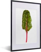 Foto in lijst - Een kleurrijke snijbiet tegen een witte achtergrond fotolijst zwart met witte passe-partout 40x60 cm - Poster in lijst (Wanddecoratie woonkamer / slaapkamer)