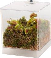 Swampworld Mini Terrarium - LED Verlichting - Vleesetende Plant - Venus Vliegenval