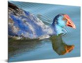 Reflectie van een purperkoet in het water Aluminium 160x120 cm - Foto print op Aluminium (metaal wanddecoratie) XXL / Groot formaat!