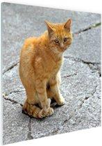 FotoCadeau.nl - Rode kat op straat Glas 50x50 cm - Foto print op Glas (Plexiglas wanddecoratie)