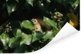 Een verstopt goudhaantje tussen de groene klimop bladeren Poster 120x80 cm - Foto print op Poster (wanddecoratie woonkamer / slaapkamer)