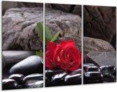Glasschilderij Roos   Rood, Zwart   120x80cm 3Luik   Foto print op Glas    F006147