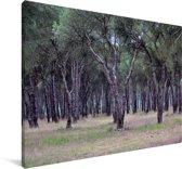 Eikenbossen in het Spaanse Nationaal park Doñana Canvas 90x60 cm - Foto print op Canvas schilderij (Wanddecoratie woonkamer / slaapkamer)
