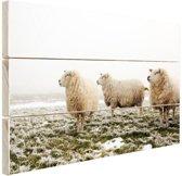 Drie schapen in de winter Hout 30x20 cm - klein - Foto print op Hout (Wanddecoratie)
