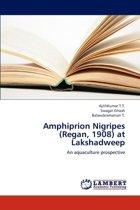 Amphiprion Nigripes (Regan, 1908) at Lakshadweep