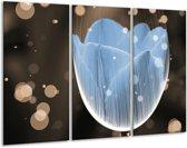 Glasschilderij Tulp | Blauw, Grijs | 120x80cm 3Luik | Foto print op Glas |  F004991
