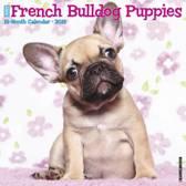 French Bulldog Puppies 2019 Kalender