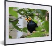 Foto in lijst - Treurmaina in een boom vol met bladeren fotolijst zwart met witte passe-partout klein 40x30 cm - Poster in lijst (Wanddecoratie woonkamer / slaapkamer)