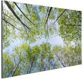 FotoCadeau.nl - Foto van het bos in de zomer Aluminium 30x20 cm - Foto print op Aluminium (metaal wanddecoratie)