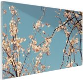 Bloesem Glas 120x80 cm - Foto print op Glas (Plexiglas wanddecoratie)