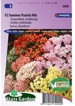 Sluis Garden Duizendblad Summer Pastels F2 Mix (achillea)