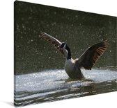 Een Canadese Gans op een meer Canvas 180x120 cm - Foto print op Canvas schilderij (Wanddecoratie woonkamer / slaapkamer) XXL / Groot formaat!
