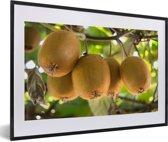Foto in lijst - Kiwi's in warm land te rijpen aan boom fotolijst zwart met witte passe-partout 60x40 cm - Poster in lijst (Wanddecoratie woonkamer / slaapkamer)