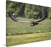 Vale gier vliegt laag over de grond Canvas 140x90 cm - Foto print op Canvas schilderij (Wanddecoratie woonkamer / slaapkamer)