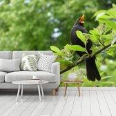 Fotobehang vinyl - Mannelijke merel op een tak tussen groene bladeren breedte 375 cm x hoogte 280 cm - Foto print op behang (in 7 formaten beschikbaar)
