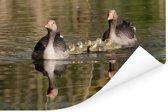 Zwemmende grauwe ganzen in het water Poster 90x60 cm - Foto print op Poster (wanddecoratie woonkamer / slaapkamer)