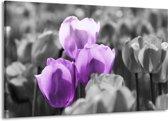 Canvas schilderij Tulpen | Paars, Grijs, Zwart | 140x90cm 1Luik
