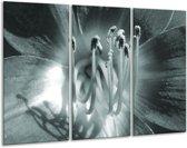 Glas schilderij Bloem | Grijs, Groen | 120x80cm 3Luik | Foto print op Glas |  F006328