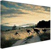 FotoCadeau.nl - Kangoeroes op de weg  Canvas 30x20 cm - Foto print op Canvas schilderij (Wanddecoratie)