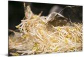 Afbeelding van taugé met een donkere achtergrond Aluminium 90x60 cm - Foto print op Aluminium (metaal wanddecoratie)
