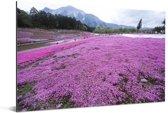 Veld vol met vlammenbloemen in een paars landschap Aluminium 90x60 cm - Foto print op Aluminium (metaal wanddecoratie)