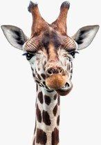 Giraffe portret - Print op Aluminium - 40x40 cm