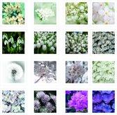 ND - wenskaarten bloemen collectie - 32 stuk met envelop