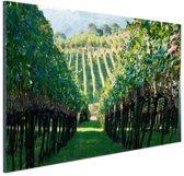 Wijngaard in Brazilie foto Aluminium 180x120 cm - Foto print op Aluminium (metaal wanddecoratie) XXL / Groot formaat!
