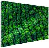 Theeplantages India Glas 30x20 cm - Foto print op Glas (Plexiglas wanddecoratie)