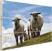 Vier schapen op alpenweide Hout 80x60 cm - Foto print op Hout (Wanddecoratie)