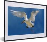 Foto in lijst - Roodsnavelkeerkringvogel strekt zijn vleugels fotolijst zwart met witte passe-partout klein 40x30 cm - Poster in lijst (Wanddecoratie woonkamer / slaapkamer)