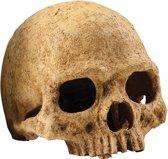 Exo Terra Primate Skull Schuilplaats - Terrarium Decoratie - 11 x 21 x 14 cm