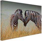 Zebras  Canvas 60x40 cm - Foto print op Canvas schilderij (Wanddecoratie woonkamer / slaapkamer) / Dieren Canvas Schilderij