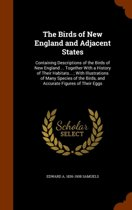 9781146128308 - Edward Augustus Samuels, Edward Augustu Samuels - The Birds of New England and Adjacent States