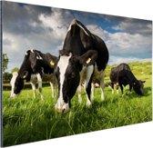 Drie Holstein koeien Aluminium 120x80 cm - Foto print op Aluminium (metaal wanddecoratie)