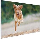 Rennende hond foto Aluminium 120x80 cm - Foto print op Aluminium (metaal wanddecoratie)